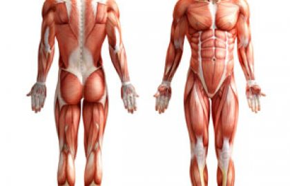 הרכב הגוף והרזייה